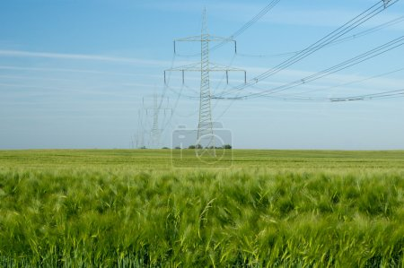 Photo for Power pole and barley field - Royalty Free Image