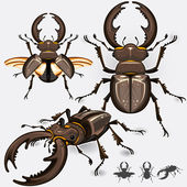 Stag Beetle Insect