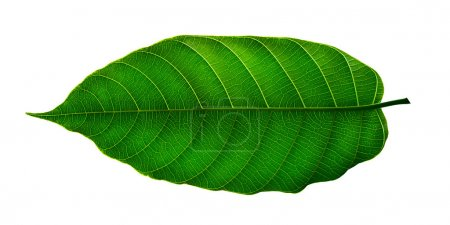 Photo for The art Green leaf - Royalty Free Image