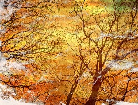 Photo pour Papier grunge avec silhouettes d'arbres - image libre de droit
