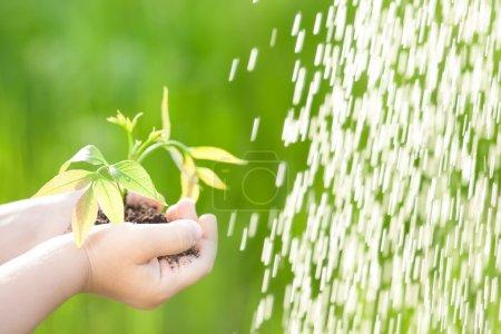 Foto de Niño con árbol joven cerca de verter agua sobre fondo verde primavera. concepto de Ecología - Imagen libre de derechos