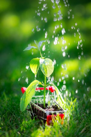Photo for Young plant in shopping cart against spring green background. Ecology concept - Royalty Free Image