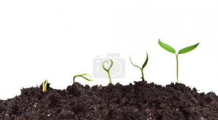 Photo for Plant germination and growth - love for nature concept with heart shaped seedling - Royalty Free Image
