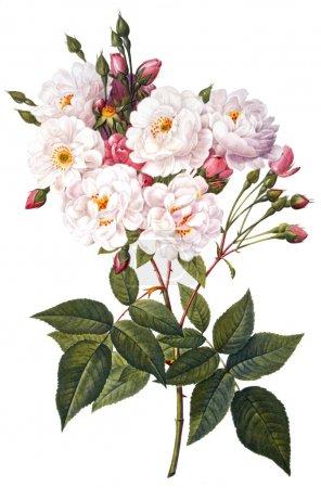 Foto de Ilustración de la flor - Imagen libre de derechos
