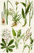 Ilustrace barva květin v akvarely