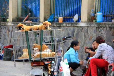 Puppies in an cage for sale in Vietnam