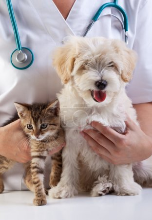 Photo for Little dog and cat at the veterinary checkup - Royalty Free Image