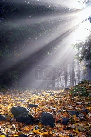 Photo pour Soleil du matin dans le brouillard, dans une forêt à feuilles - image libre de droit