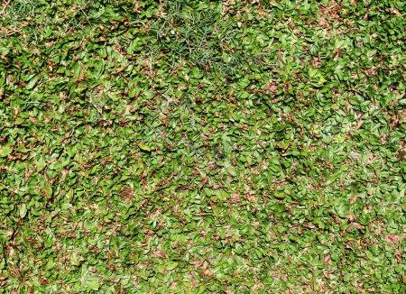 Photo pour Texture d'herbe verte haute définition - image libre de droit