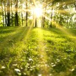 Sunlight in the green forest, spring time...