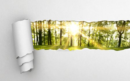 Photo for Gray torn paper and green forest background - Royalty Free Image