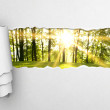 Gray torn paper and green forest background...