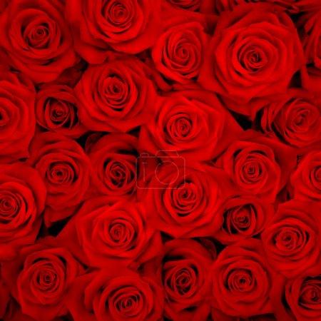 Photo pour Gros bouquet de roses rouges - image libre de droit