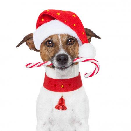 Photo pour Chien de Noël comme Père Noël - image libre de droit
