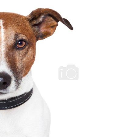 Photo pour Bannière porte-espace chien - image libre de droit