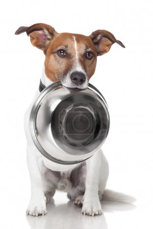 Photo for Hungry dog food bowl mouth - Royalty Free Image
