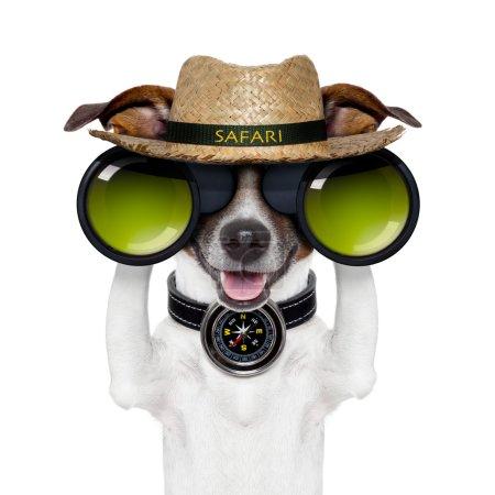 Photo for Binoculars safari compass dog watching - Royalty Free Image