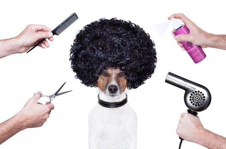 Photo pour Coiffeur ciseaux peigne chien sèche-cheveux - image libre de droit