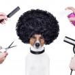 Hairdresser scissors comb dog dryer hair...