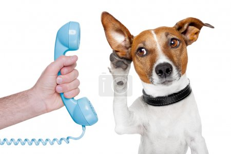 Photo for Dog on the phone male hand listening carefully - Royalty Free Image