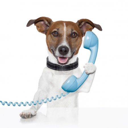 Photo for Dog on the phone talking and calling - Royalty Free Image