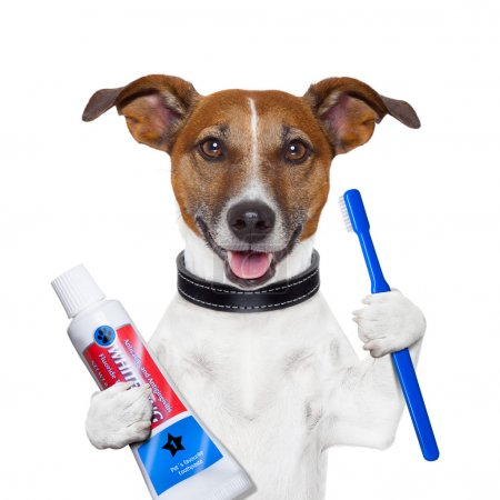 Photo for Teeth cleaning dog with toothpaste and toothbrush - Royalty Free Image