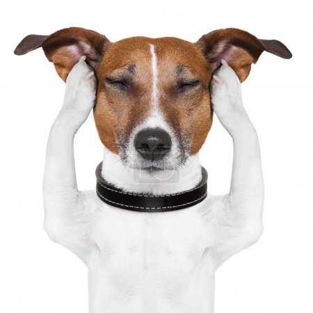 Foto de Perro medita con los ojos cerrados y los oídos - Imagen libre de derechos