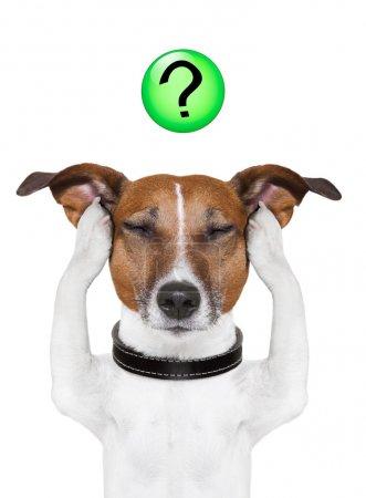 Photo pour Pensée de chien avec un point d'interrogation sur le dessus - image libre de droit
