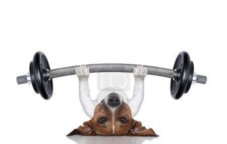 Photo for Fitness dog lifting a heavy big dumbbell - Royalty Free Image