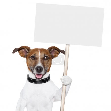 Photo for Dog holding an empty placard and licking empty placard and smiling - Royalty Free Image