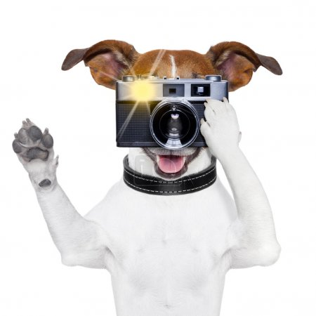 Photo for Dog taking a photo with an old camera and flashing - Royalty Free Image