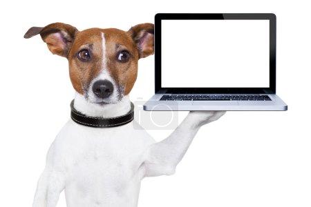 Photo pour Chien tenant un PC portable vierge sur la patte - image libre de droit