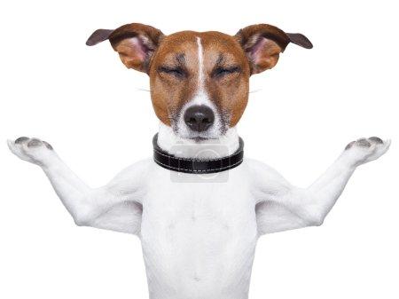 Photo pour Méditation chien à bras levé et fermé les yeux - image libre de droit