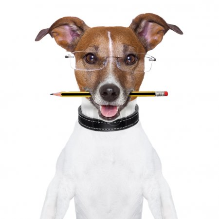 Photo for Dog with pencil in mouth and glasses - Royalty Free Image