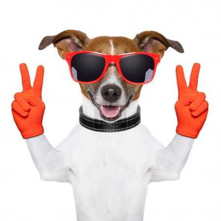 peace and victory fingers dog