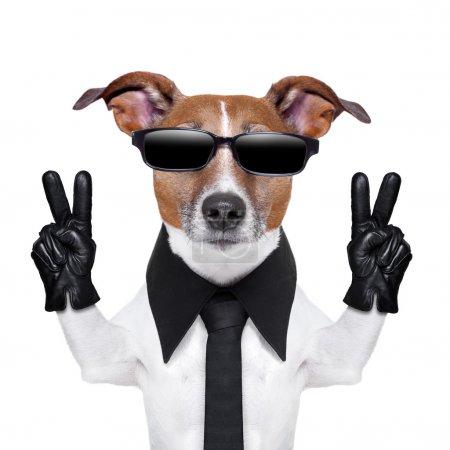 Photo pour Chien cool avec les doigts de la paix en blouson de cuir noir - image libre de droit