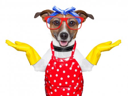 Photo for Housewife dog with open arms , happy to help - Royalty Free Image