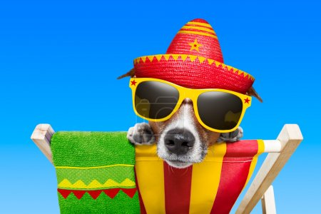 Photo for Mexican dog on vacation relaxing on a deck chair - Royalty Free Image