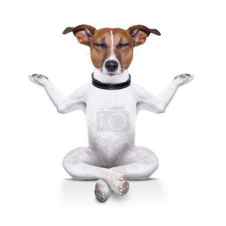 Photo pour Chien de yoga assis détendu les yeux fermés - image libre de droit