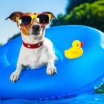 Dog on blue air mattress in refreshing water...
