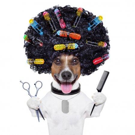 Photo pour Afro look chien avec de très gros cheveux noirs bouclés, ciseaux et peigne à cheveux avec des rouleaux de cheveux - image libre de droit