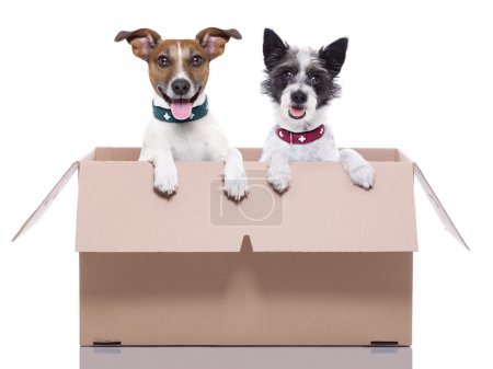 Photo for Two mail dogs in a brown moving box - Royalty Free Image