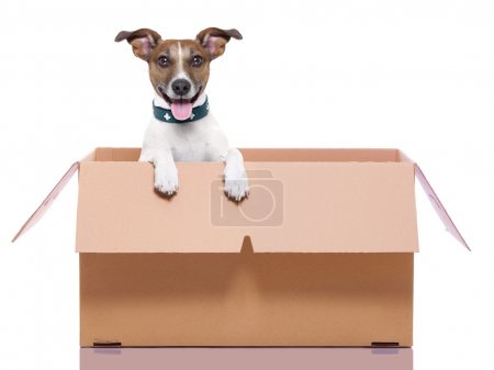 Photo for Mail dog in a moving very big moving box - Royalty Free Image