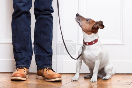 Photo for Dog looking up to owner waiting to go walkies - Royalty Free Image