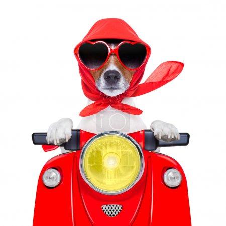 chien moto été chien