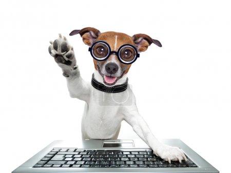 Photo pour Ordinateur stupide cinq haut avec patte de chien - image libre de droit