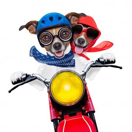 Photo pour Couple de la moto à vitesse avec lunettes casque et fou - image libre de droit