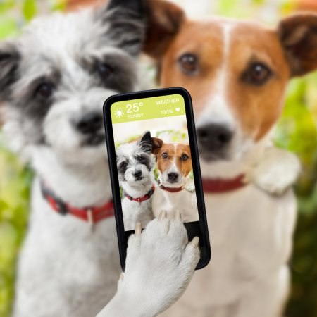 Photo for Couple of dog taking a selfie together with a smartphone - Royalty Free Image