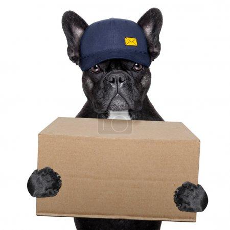 Photo for Postal dog delivering a big brown package - Royalty Free Image