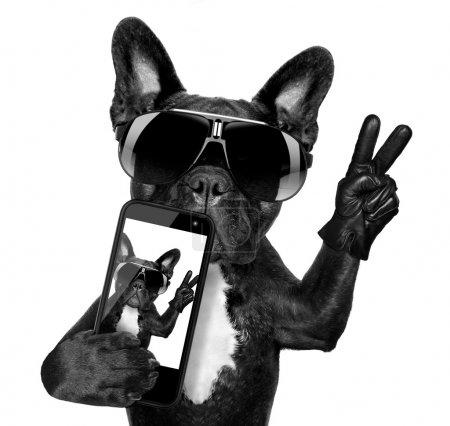 Photo pour Bouledogue français prenant une selfie avec cool lunettes de soleil fantaisies - image libre de droit